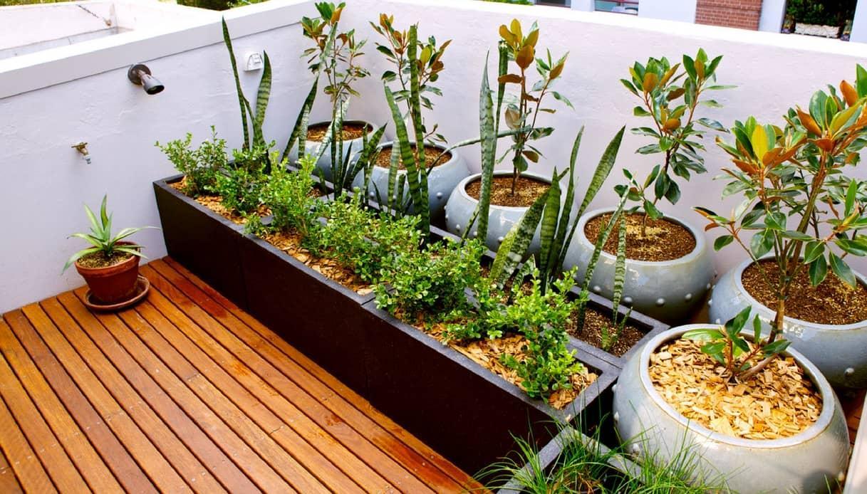 Giardino Sul Balcone Di Casa : Organizzarne un orto fai da te sul balcone di casa ecco come fare